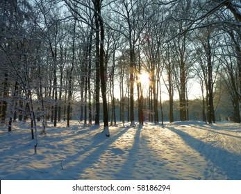 Wintersun in snowy forrest