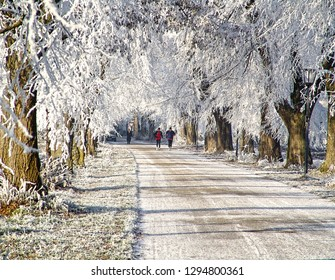 wintertime, joggers running along an alley flanked by trees with white branches glazed by ice