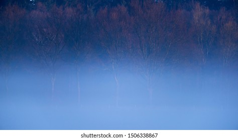 Wintery forest edge in morning mist.