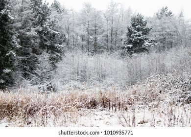 a wintery scene with trees and shrubs after fresh snow fall in north england