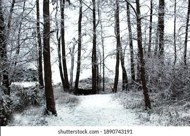 Wintery Snow Scene Nature Reserve - Shutterstock ID 1890743191