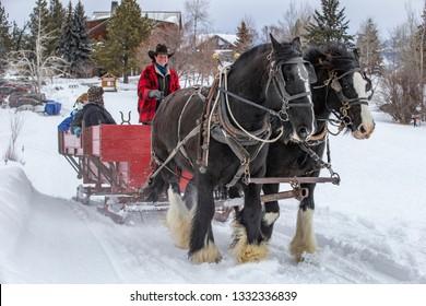 Winthrop, Washington state, USA - March 1, 2019: Winter fan sleigh ride with beautiful Percheron horses
