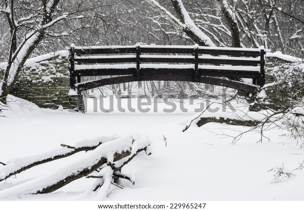 Wintry crossing in woods: Footbridge across a stream covered with snow in a winter snowstorm, with a fallen tree in foreground, in northern Illinois, USA, at the start of January