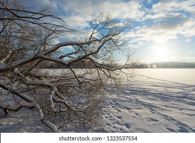 Wintry landscape on the lake ice on a cold winter morning in Finland. Branches in front with blue sky and sunrise.