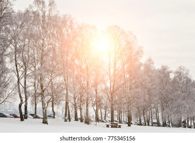 Wintry landscape in park. Hassleholm, Sweden.