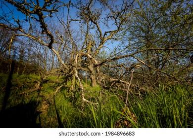 Wiosenne słońce nad polami. Zarośnięte tory kolejowe. Pokręcone drzewa. Droga polna - Shutterstock ID 1984896683