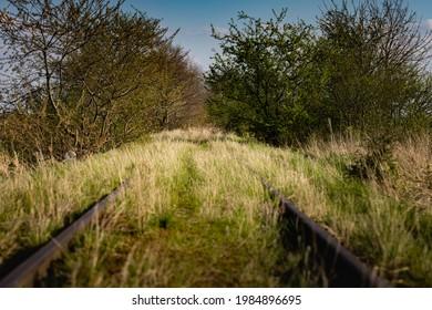 Wiosenne słońce nad polami. Zarośnięte tory kolejowe. Pokręcone drzewa. Droga polna - Shutterstock ID 1984896695