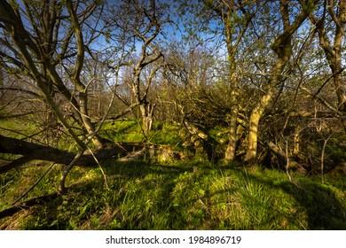 Wiosenne słońce nad polami. Zarośnięte tory kolejowe. Pokręcone drzewa. Droga polna - Shutterstock ID 1984896719