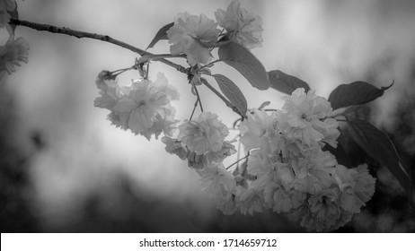 wiosna w ogrodzie, kwitnące drzewa - Shutterstock ID 1714659712