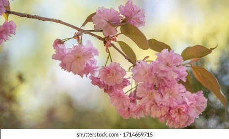 wiosna w ogrodzie, kwitnące drzewa - Shutterstock ID 1714659715