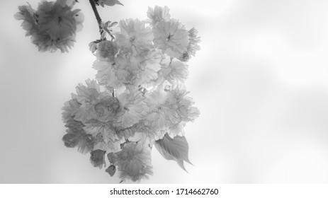 wiosna w ogrodzie, kwitnące drzewa - Shutterstock ID 1714662760