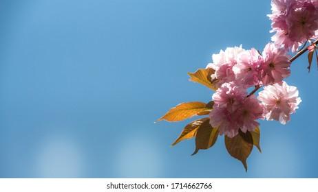 wiosna w ogrodzie, kwitnące drzewa - Shutterstock ID 1714662766