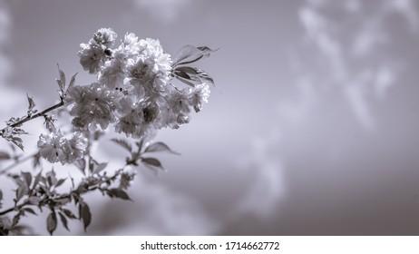 wiosna w ogrodzie, kwitnące drzewa - Shutterstock ID 1714662772