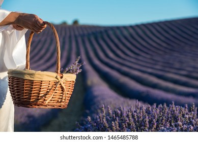 Wire basket for lavender collection
