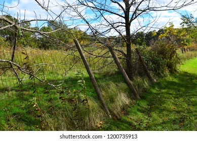 A wire fence line with the posts all bent over in a row off into the distance.