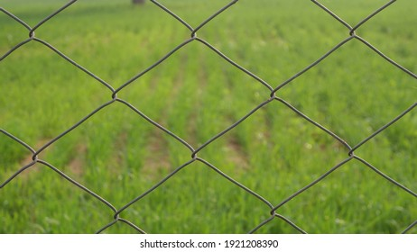 Wire fence in a wheat field to protect crops in villages. Barbwire marks the boundary of farmland, India