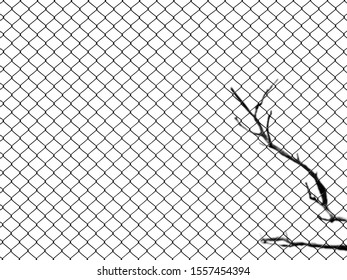 wire mesh of fence with dry branch of tree isolated on white background