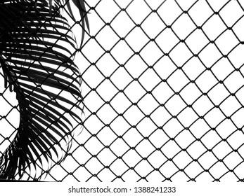 wire mesh of fence with silhouette palm leaf on white background
