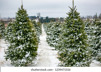 Christmas Tree Farm Images Stock Photos Vectors Shutterstock