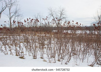 Wisconsin Winter Berries