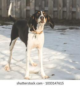Wisconsin Winter Dog Photoshoot