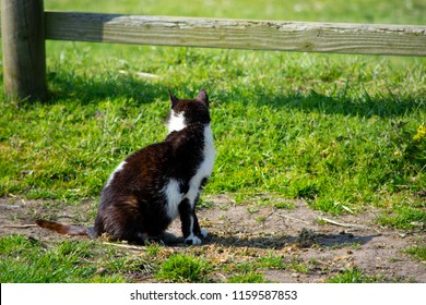 Wise Old Farm Cat