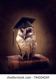 Wise owl sitting on book