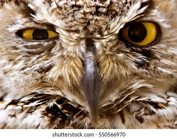 Wise and Shrewd Old Owl, Looking at You