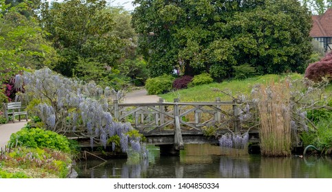 Wisley, Surrey, UK. May 2019. Purple flowered wisteria climbing over a bridge at RHS Wisley, flagship garden of the Royal Horticultural Society.