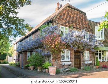 Wisteria in bloom, climbing up the wall of a house in an ancient village in England