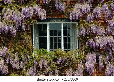 Wisteria in bloom framing a cottage window