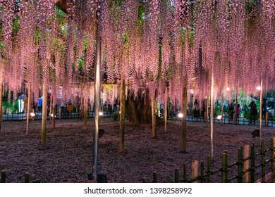 Wisteria flower at Ashikaga flower park in Japan at night.