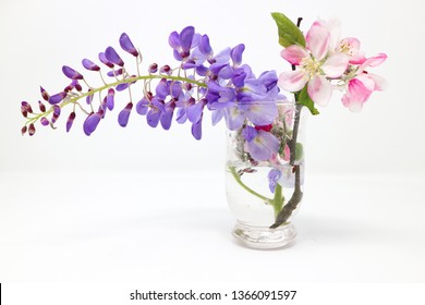 Wisteria flower and cherry blossoms in a glass pot isolated on white background
