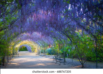 Wisteria Lane in the Adelaide Botanic Gardens, South Australia.
