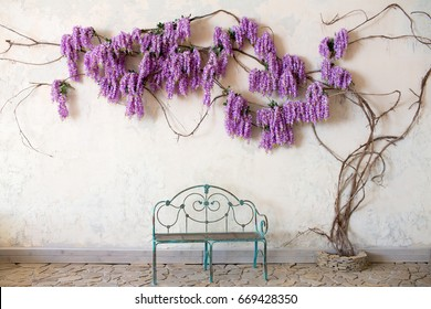 Wisteria tree and a bench