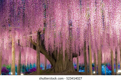 wisteria trellis. great views of Japan
