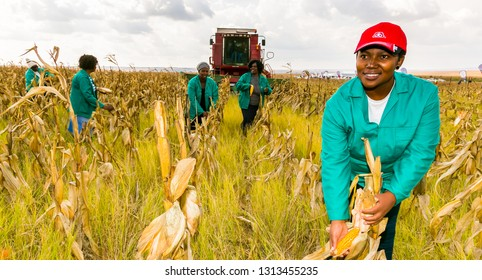 Witbank, South Africa - May 26 2016: Commercial Maize Farming in Africa