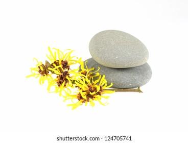 Witch Hazel and Zen Stones