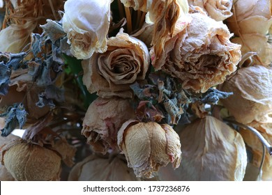A withered bouquet of roses. Background of wilted roses. Withered bride's bouquet. Backdrop withered bouquet of roses. Withered flowers