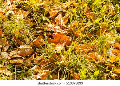 withered fallen leaves on the ground, note shallow depth of field