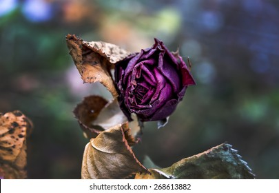 withered flowers. death, end of life, death, forgetting and remembering
