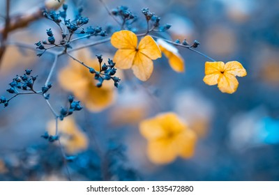 withered hydrangeas at autumn with beautiful background