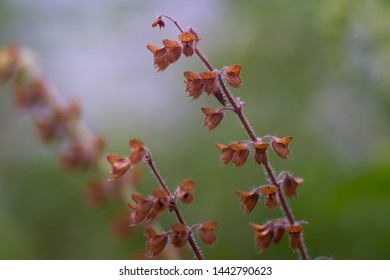 withered leaves in the garden