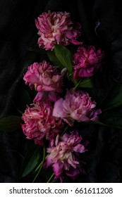 Withered pink peonies flowers on a dark background. Low key.top view. Flowers background.