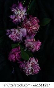 Withered pink peonies on a dark background. Low key.top view.Flowers background