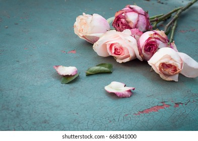 Withered pink roses on old turquoise metal plate, selective focus