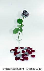 withered red-silver rose in champagne glass with shadow on white background