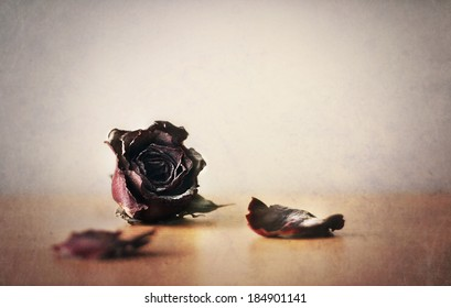 withered rose -still life