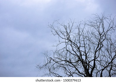 Withered tree against a dark sky, wallpaper