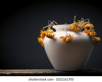 Withered yellow daisy flower on a dark background